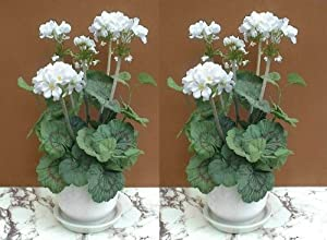 2 st ck wei e geranien kunstpflanzen 46cm ohne t pfe k che haushalt. Black Bedroom Furniture Sets. Home Design Ideas