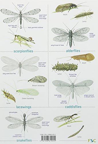 Guide to Insects of the British Isles (Chart)
