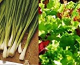 SPRING ONION and MIXED LETTUCE seeds - SALAD CROPS