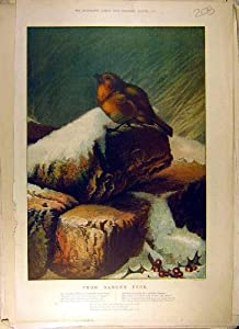 robin vogel gedicht weihnachten vogel lied alter druck. Black Bedroom Furniture Sets. Home Design Ideas