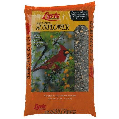 Cheap Lyric Black Stripe Sunflowers 5 Lb (24-47278)