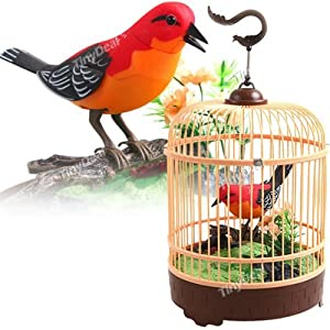 Amazon.com: Singing & Chirping Bird in Cage