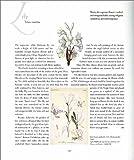 The Language of Flowers (Art & Design)