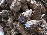 Very Rare Kali Haldi Black Turmic Haldi Curcuma Caesia