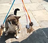 3 Ball Feather Teaser and Exerciser For Cat and Kitten - Cat Toy Interactive Cat Wand