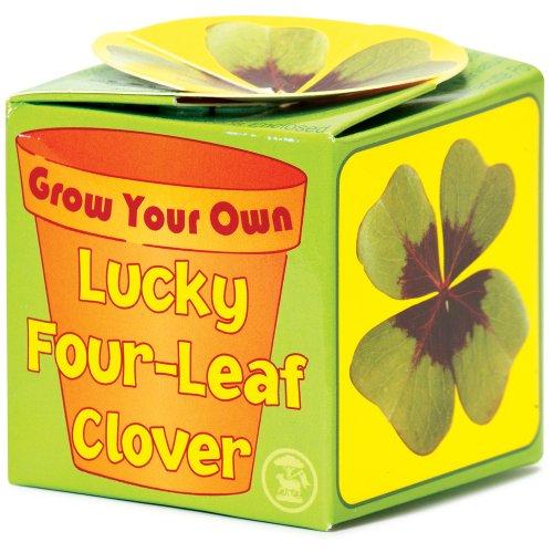 faites-pousser-votre-propre-trefle-a-quatre-feuilles