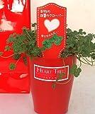 あなたのところへ 幸せの四つ葉のクローバー、 お届けします 本物の四つ葉のクローバー鉢植えです