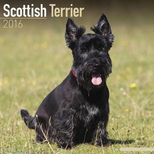 Scottish Terrier Calendar 2016 (Square)