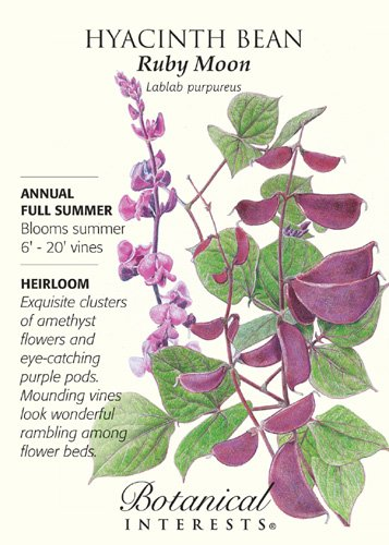 Ruby Moon Hyacinth Bean Seeds - 3 grams