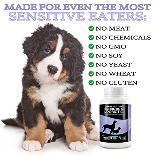 Are Human Probiotics Safe For Dogs