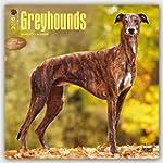 Greyhounds 2016 - Gro�er Englischer W...