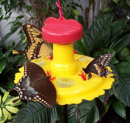 Butterfly Nectar & Fruit Feeder