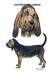 Bloodhound - Double Image by Cindy Farmer