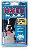 Company Of Animals HALTI Headcollar, Black, 2-Size