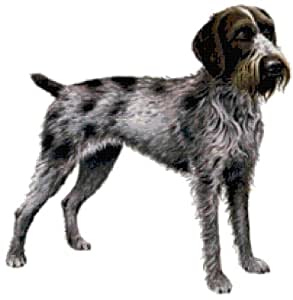 Amazon.com: German Wirehaired Pointer Dog Counted Cross ...