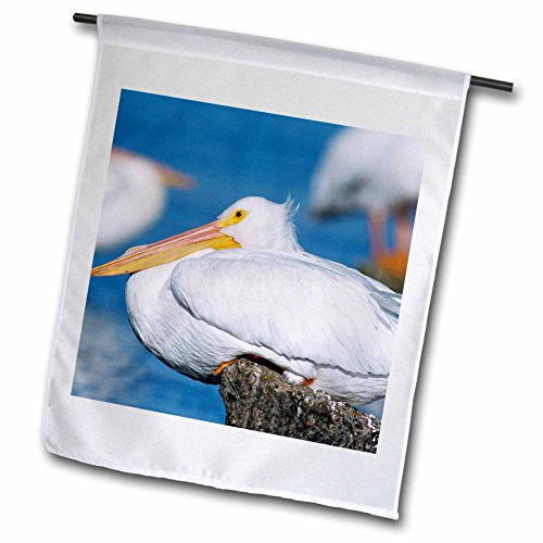 3drose-fl-84397-1-blanco-americano-pelican-bird-rockport-texas-na02-rnu0348-rolf-nussbaumer-bandera-