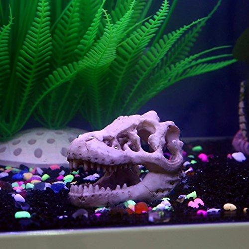 Decoration Aquarium Resine Amazon