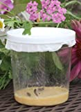 Butterfly Larvae Kit - Ships with Live Caterpillars!