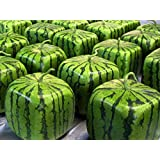 Small Watermelon Mold Square Shape