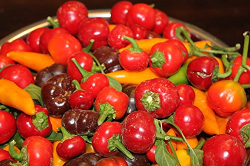 Zwerg Mini Pfeffer 'Mini Bell' 40 Samen Mix rot Orange gelb grün (Mini Paprika)