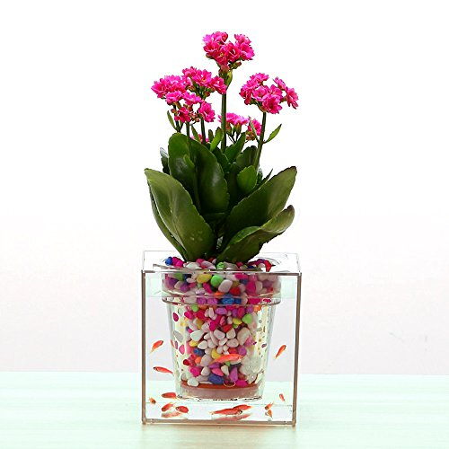 Flower Pot Aquarium,Smart Self-Watering Plant Pot,Mini Transparent Aquaponics Fish Tank,Beautiful Home Office Desk Decor Gift