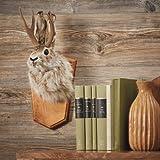 Kotulas Jackalope Wall Mount - Rabbit with Antlers (Color: Natural)