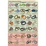 North American Snakes - Laminated Poster