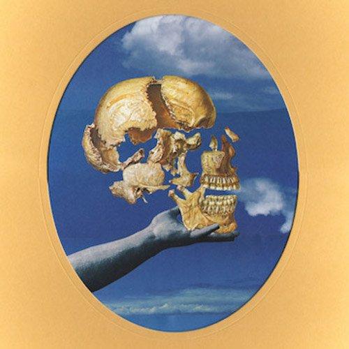 Sun Angle - Skullflower