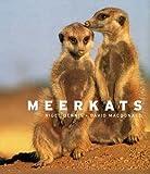 Meerkats (1408112124) by Dennis, Nigel