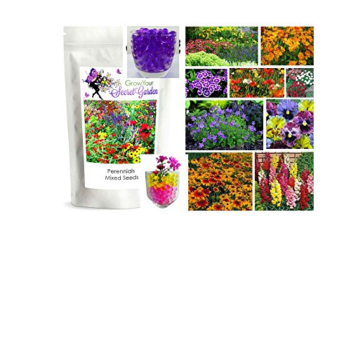 mixed-perennial-flowers-seeds-2000-rainbow-of-colours-in-your-garden