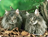 Norwegian Forest Cats 'Sentiment' Computer Mouse Mat, Ref:SOUL-8M