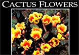 Cactus Flowers (Postcard Books)