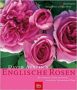 david austin 39 s englische rosen die sch nsten sorten im. Black Bedroom Furniture Sets. Home Design Ideas