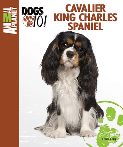 Cavalier King Charles Spaniel (Animal Planet Dogs 101)