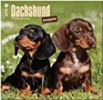 Dachshund Puppies 2015 - Dackel Welpe...
