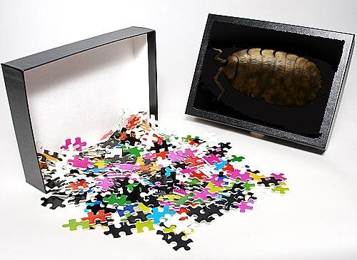 Photo Jigsaw Puzzle Of Lrds-148 Common Rough Woodlouse From Ardea Wildlife Pets