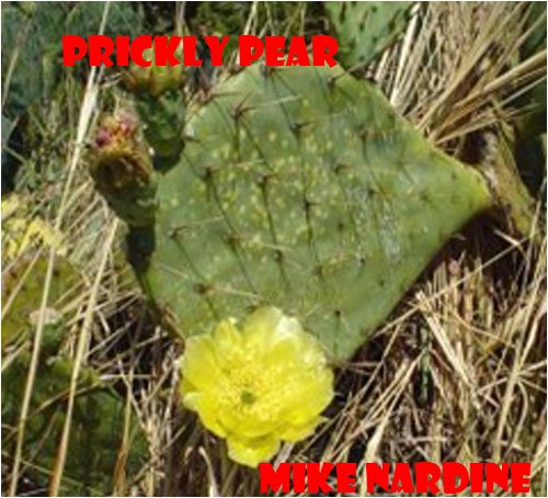 prickly-pear-a-contemporary-romance-set-in-chicago-and-the-southwest