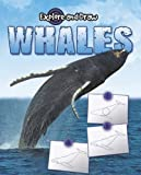 img - for Whales (Explore & Draw) book / textbook / text book