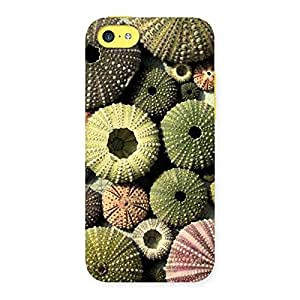 Sea Shell Umbrella Back Case Cover for iPhone 5C
