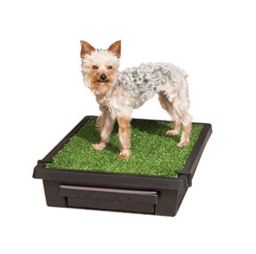 radio-systems-pet-loo-training-system-17-x-21-in