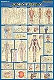 Anatomy-Laminated-Medical-Series