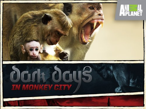 Dark Days in Monkey City Season 1