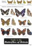 Guide to the Butterflies of Britain (Field Studies Council Occasional Publications)