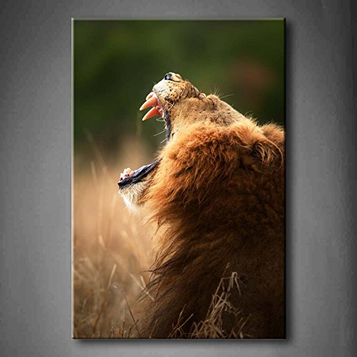 Lion Displays Dangerous Teeth Kruger National Park South Africa In Grassland Wall Art Painting The Picture Print On Canvas Animal Pictures For Home Decor Decoration Gift (Stretched By Wooden Frame,Ready To Hang)
