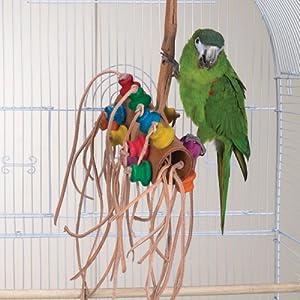 نغمة العصافير الشهيرة fun birds  51WilgdgOZL._SL500_AA300_