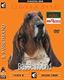 Bassethound (1 dvd)