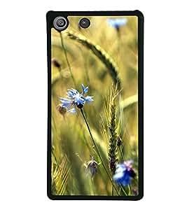 Blue Flowers 2D Hard Polycarbonate Designer Back Case Cover for Sony Xperia M5 Dual :: Sony Xperia M5 E5633 E5643 E5663
