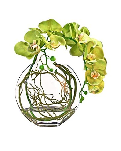Creative Displays Green Orchid with Vine in a Glass Vase