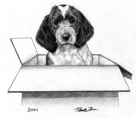 Pbgv puppies puppies - Petit basset griffon vendeen breeders toulon ...
