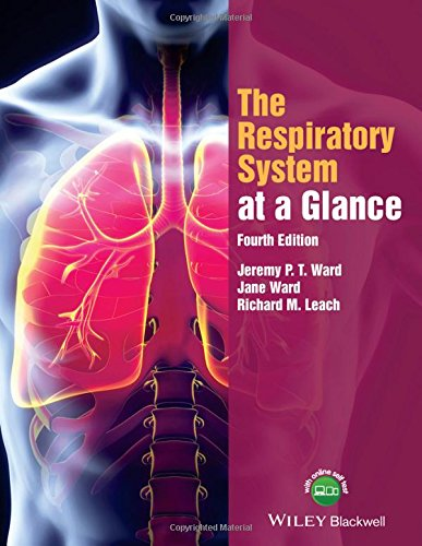 the-respiratory-system-at-a-glance